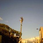 三島大社夏祭り梯子のり