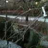 三嶋大社の風景20110130
