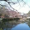 三島大社の風景20110207