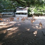 三嶋大社の風景20110716