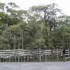 三嶋大社の風景20111003