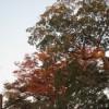 三嶋大社の風景20111016