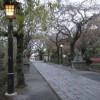 三嶋大社の風景20111110
