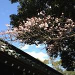 三嶋大社の風景20130214