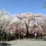 三嶋大社の風景20130321