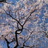 三嶋大社の風景20130322