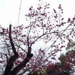 三嶋大社の風景20150307